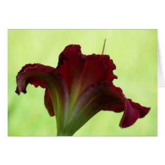 Red Silhouette - Daylily Card