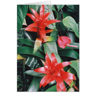 Red Spikey Tropical Flowers Card