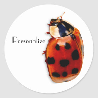 Red Spotted Ladybug With Name Round Sticker