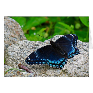 Red Spotted Purple Butterfly Card