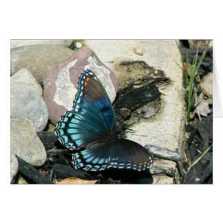 Red-Spotted Purple Butterfly Card