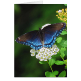 Red Spotted Purple - Butterfly Card