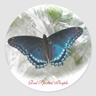 Red Spotted Purple Butterfly Sticker