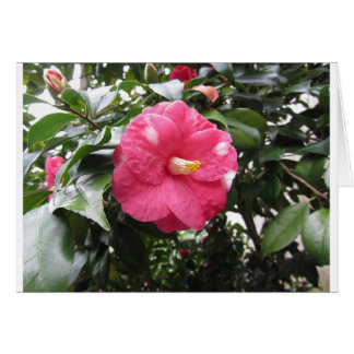 Red spotted white flower of Camellia Marmorata Card