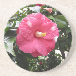 Red spotted white flower of Camellia Marmorata Coaster