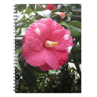 Red spotted white flower of Camellia Marmorata Notebooks