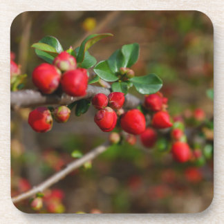 Red Spring Buds Coaster