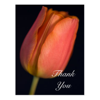 Red Spring Tulip Thank You Postcard