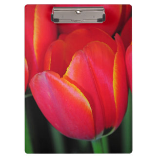 Red spring tulips clipboards