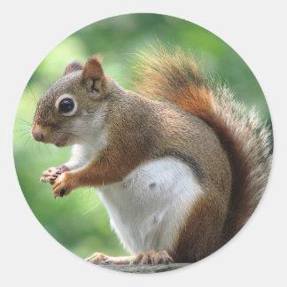 Red Squirrel Classic Round Sticker