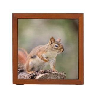 Red Squirrel Desk Organizer