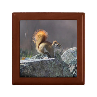 Red Squirrel Gift Box