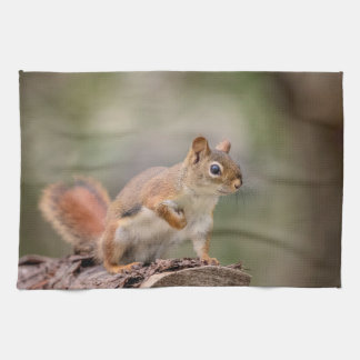 Red Squirrel Kitchen Towel