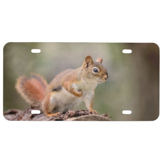 Red Squirrel License Plate
