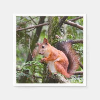 Red Squirrel Napkins Paper Napkins