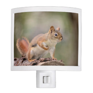 Red Squirrel Nite Light