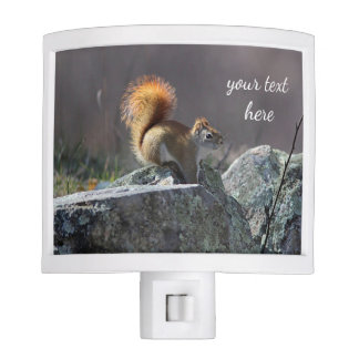 Red squirrel nite light