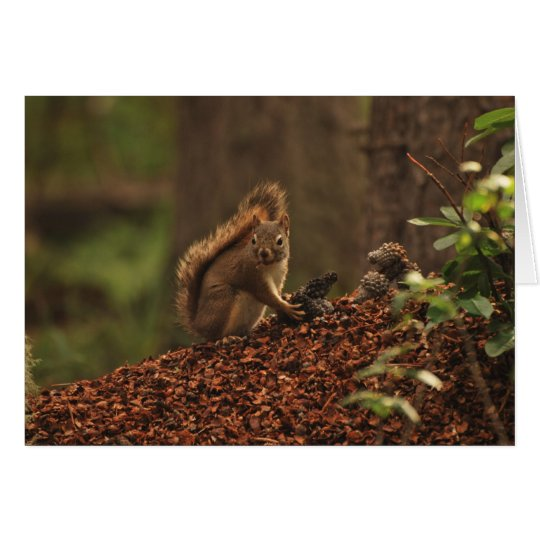 Red Squirrel on Debris Pile Card
