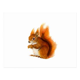 Red Squirrel Painted in Watercolor Wildlife Art Postcard