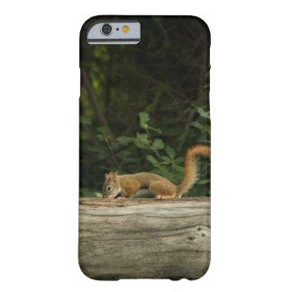 Red Squirrel Phone Case
