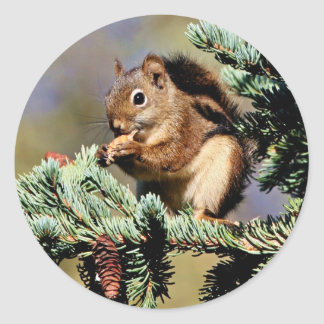 Red Squirrel Round Sticker