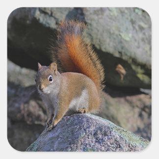 Red squirrel square sticker
