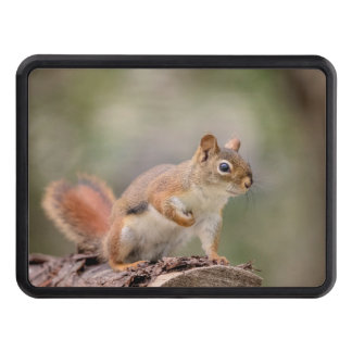 Red Squirrel Trailer Hitch Cover