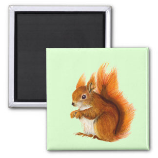 Red Squirrel Watercolor Painting Wildlife Artwork Magnet