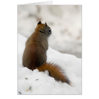 Red Squirrel's Soliloquy Card