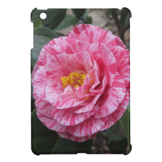 Red streaked white flower of Camellia japonica Case For The iPad Mini