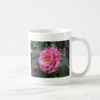 Red streaked white flower of Camellia japonica Coffee Mug