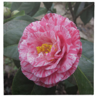 Red streaked white flower of Camellia japonica Napkin