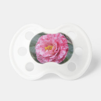 Red streaked white flower of Camellia japonica Pacifier