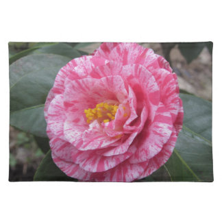 Red streaked white flower of Camellia japonica Placemat