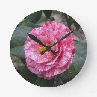 Red streaked white flower of Camellia japonica Round Clock
