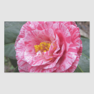 Red streaked white flower of Camellia japonica Sticker