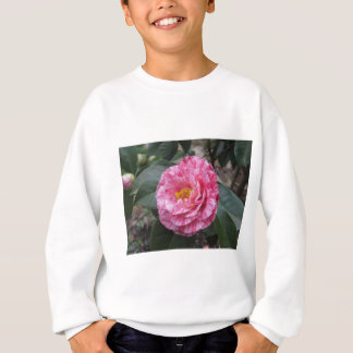 Red streaked white flower of Camellia japonica Sweatshirt