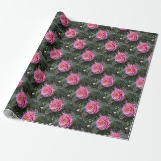 Red streaked white flower of Camellia japonica Wrapping Paper
