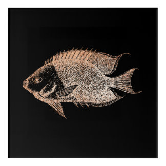 Red Stripe Fish Sea Ocean Black Rose Gold Blush Acrylic Wall Art