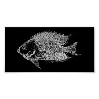 Red Stripe Fish Sea Ocean Black Silver Gray Aqua Poster