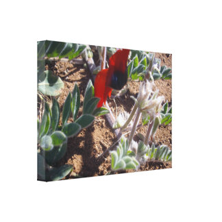 Red Stuart Desert Pea Canvas Print