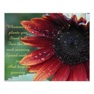 Red Sunflower, Inspirational Advice (Large) Poster