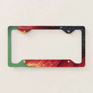 Red Sunflower Petals And Rain Drops License Plate Frame
