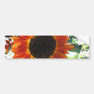 Red Sunflowers Bumper Stickers