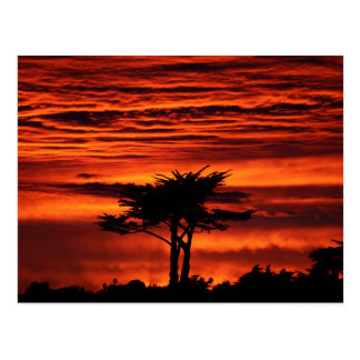 Red Sunset, Santa Cruz California Postcard