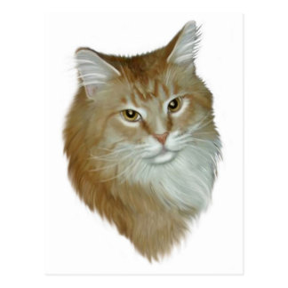 Red Tabby Maine Coon Postcard
