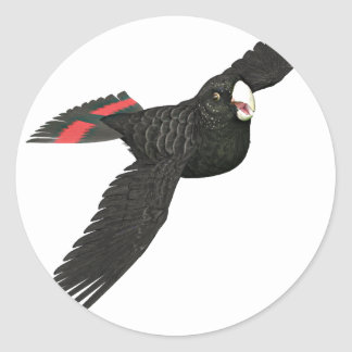 Red Tailed Black Cockatoo Classic Round Sticker
