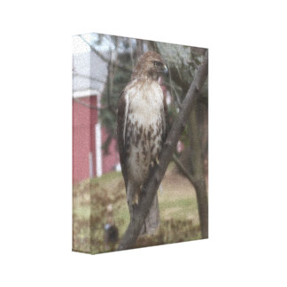 "Red-tailed Hawk 8"" x 10"" Canvas Print"