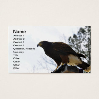 Red Tailed Hawk Against a Blue Sky Business Sky Business Card