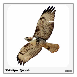Red Tailed Hawk Bird Wall Decal